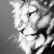 Ritratto di LIONHEART