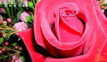 Desktop Roses